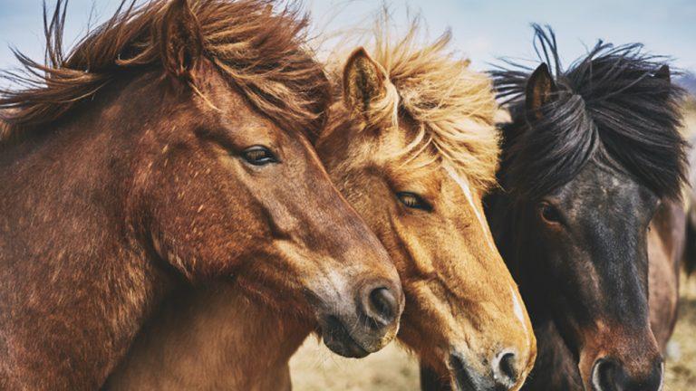 shampoo-para-caballos